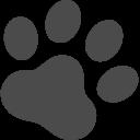 ペットシッター 子犬のしつけは大阪 兵庫のepic Wan エピックワン