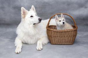 子犬の社会化