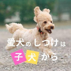 子犬 しつけ 大阪