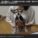 ノーズワーク 豆ちゃん 記事