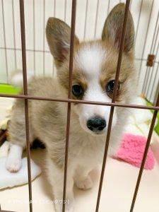 子犬トレーニング MIX犬 あろんちゃん③