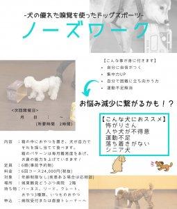 ノーズワーク 大阪